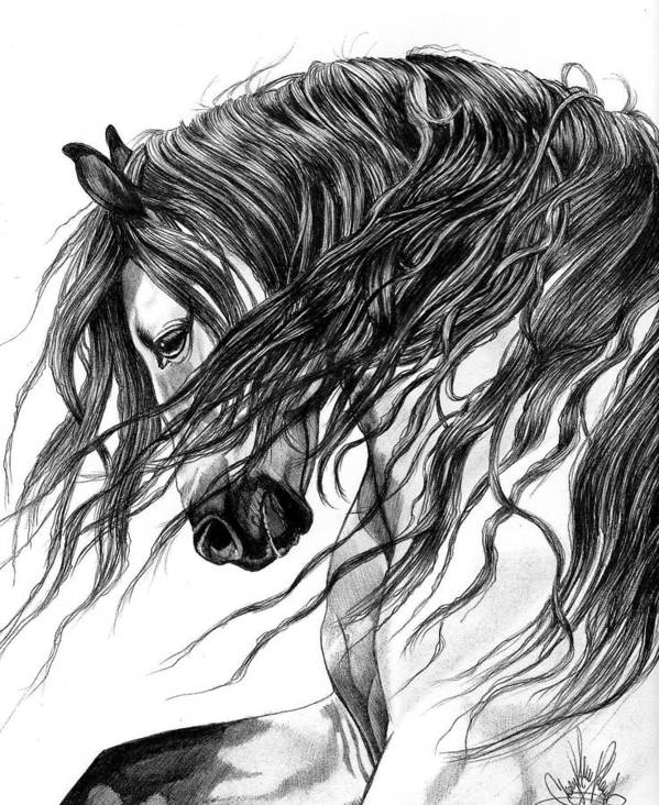 Horse Art Art Print featuring the drawing Andalusian Arabian Head by Cheryl Poland
