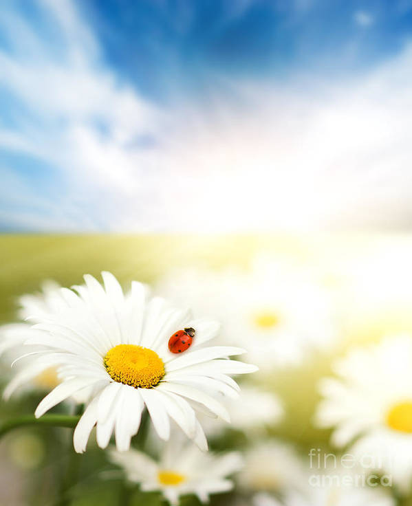 Beautiful Ladybug Art Print featuring the photograph Beautiful Ladybug And Beautiful Flower by Boon Mee