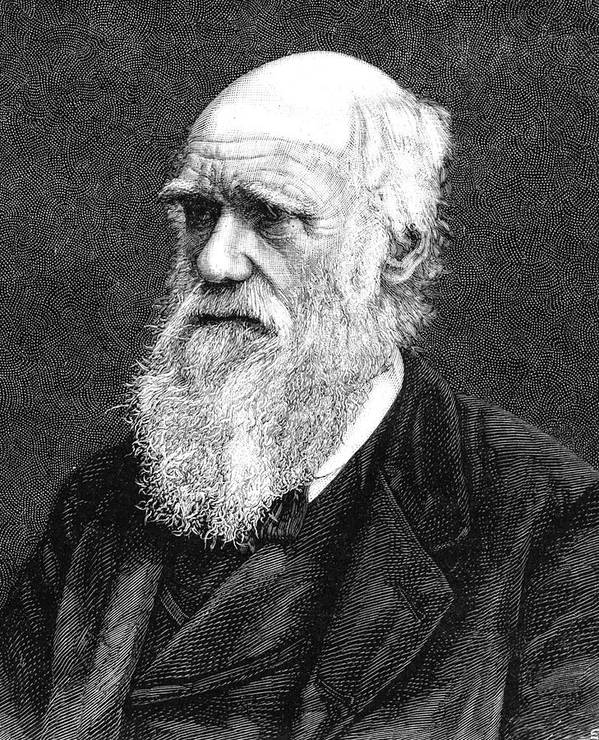 1885 Art Print featuring the photograph Charles Darwin by Collection Abecasis