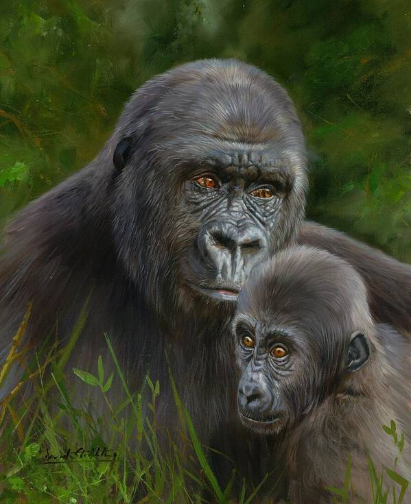 Gorilla And Baby Art Print By David Stribbling