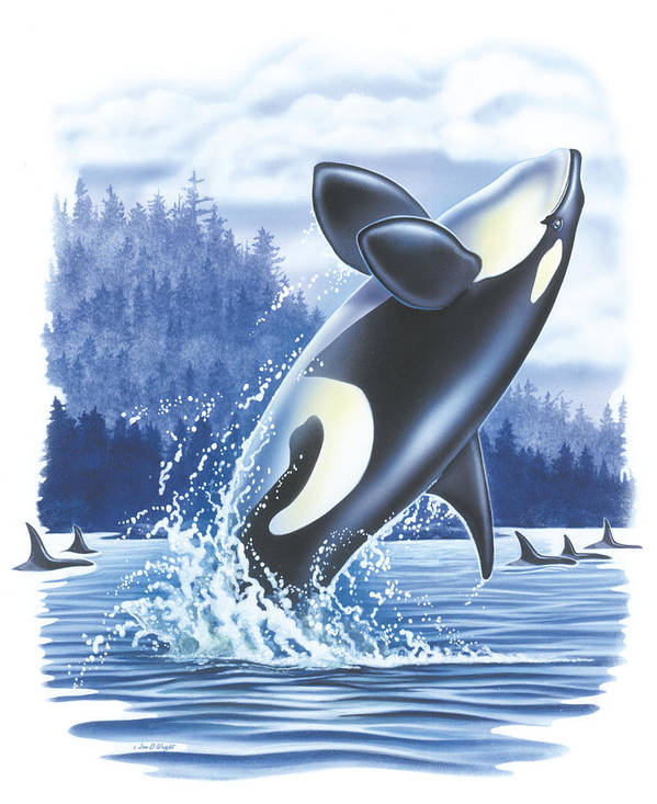 Jon Q Wright Art Print featuring the painting Jumping Orca by JQ Licensing