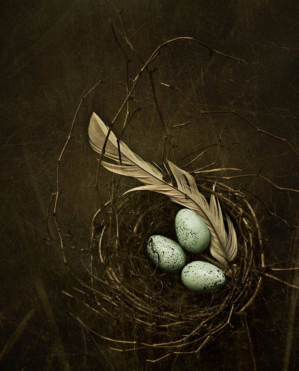 Nest Art Print featuring the photograph Rebirth by Amy Weiss