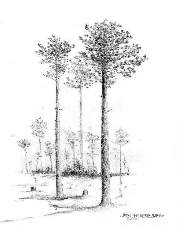 alabama southern longleaf pine art print by jim hubbard