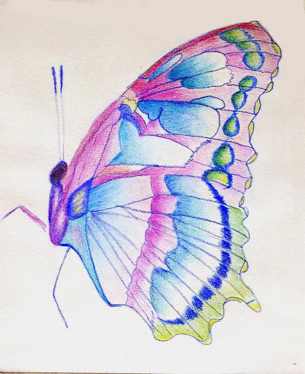 Butterfly Art Print featuring the drawing Butterflly Print by Linda Pope