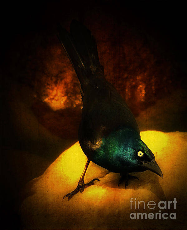 Grackle Art Print featuring the photograph Keep Your Distance by Melissa Moore-Clingenpeel