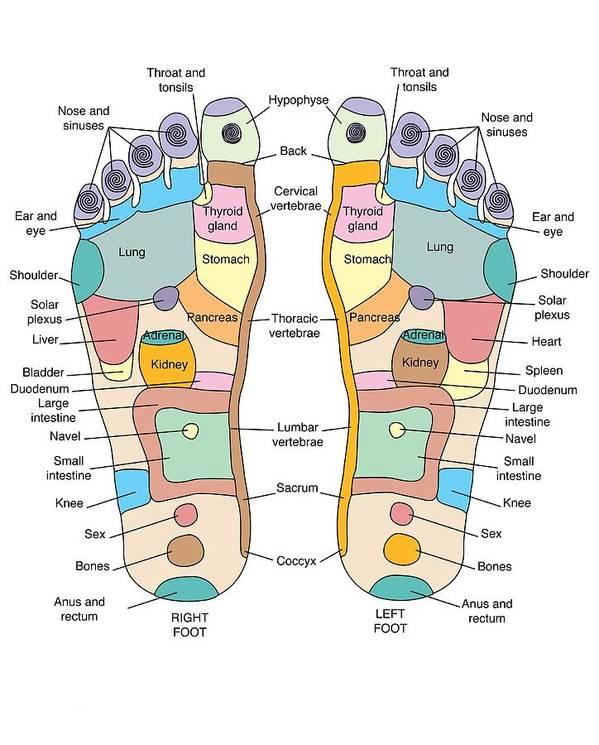 Reflexology Foot Map Artwork Art Print By Peter Gardiner