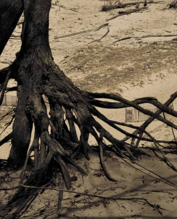 Tree Print featuring the photograph Roots by Odd Jeppesen