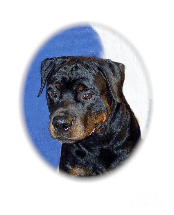 Rottweiler Digital Art Art Print featuring the digital art Rottweiler 1437 by Larry Matthews