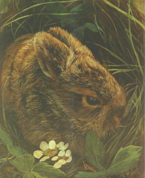 Wildlife Art Print featuring the painting Cottontail Young by Steve Greco