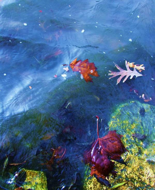 Abstract Water And Fall Leaves Art Print featuring the photograph Abstract-10 by Todd Sherlock
