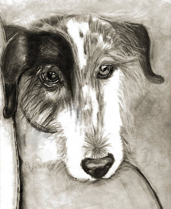 Dog Art Print featuring the drawing Blue by Crystal Suppes