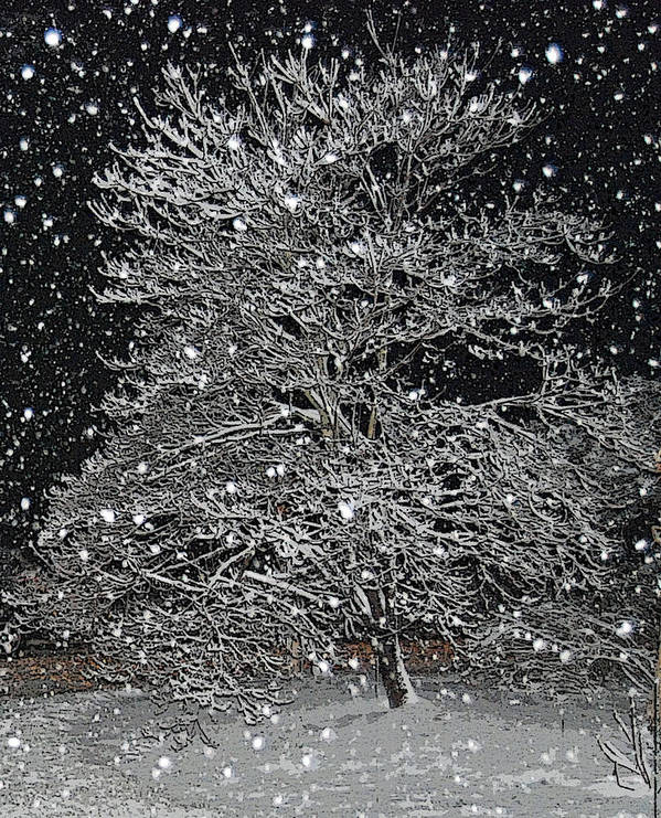 Snow Art Print featuring the photograph Bradford Pear by Patricia Motley