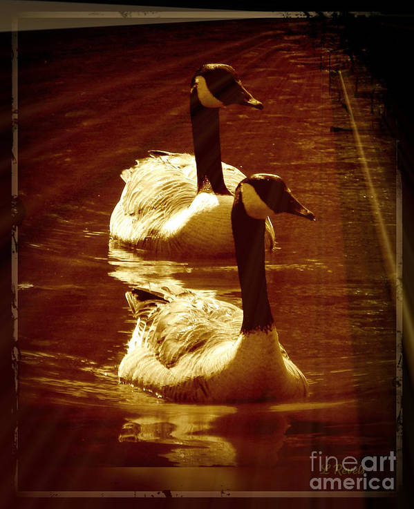 Bird Art Print featuring the photograph Canadian Gees by Leslie Revels