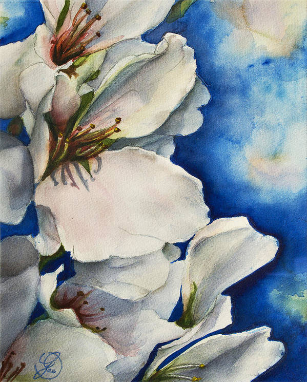 Cherry Art Print featuring the painting Cherry Blossoms by Gae Helton