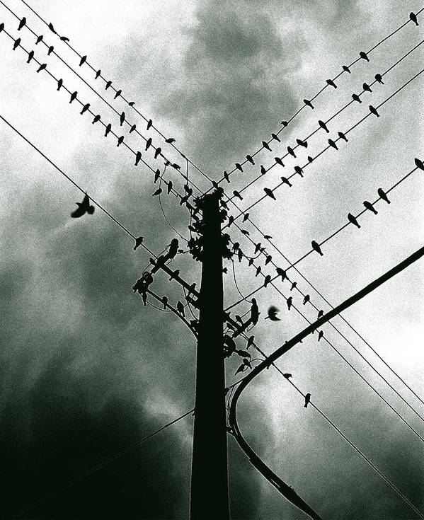 Birds Art Print featuring the photograph Here It Comes by Justin Dyal