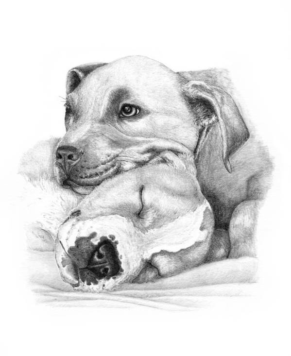 Pit Bull Art Print featuring the drawing Hope And Innocence by Deanna Maxwell