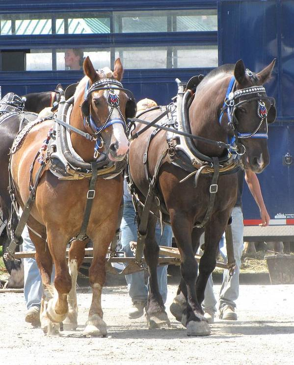 Horses Art Print featuring the photograph Horse Pull J by Melissa Parks