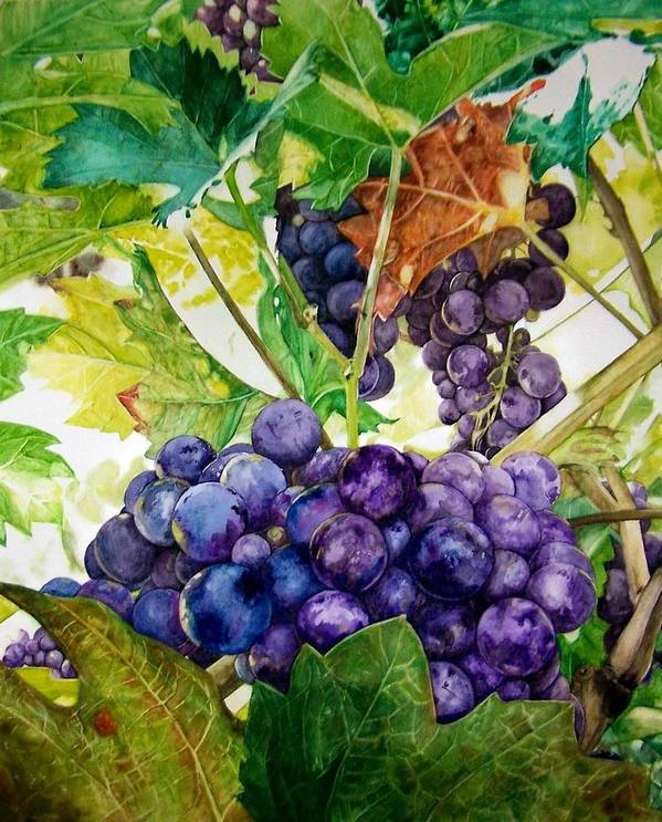 Grapes Art Print featuring the painting Napa Harvest by Lance Gebhardt