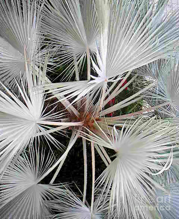 Nature Art Print featuring the photograph Palm Wonderful by Lucyna A M Green