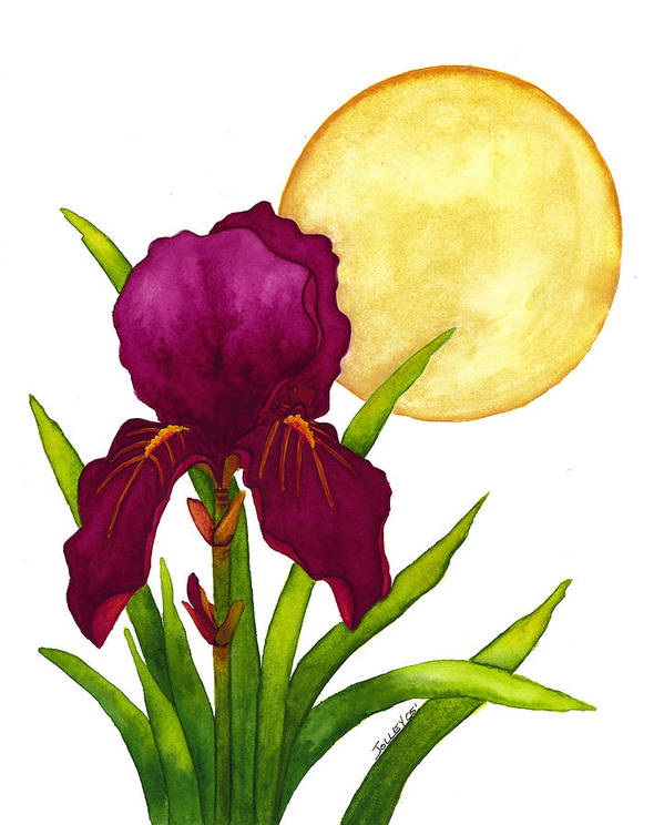 Iris Art Print featuring the painting Purple Iris by Stephanie Jolley