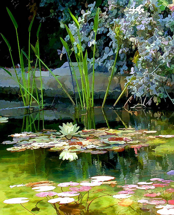 Lily Pond Art Print featuring the photograph The Lily Pond II by Lynn Andrews