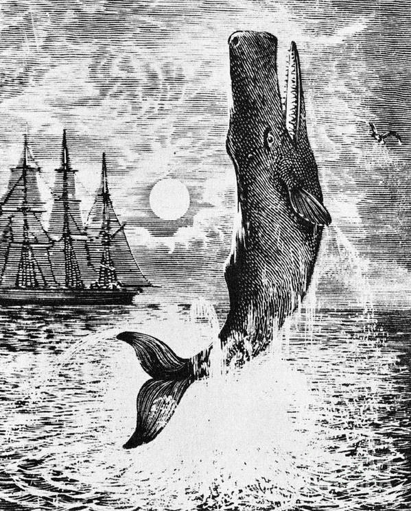 Moby Dick Art Print featuring the drawing Moby Dick by English School