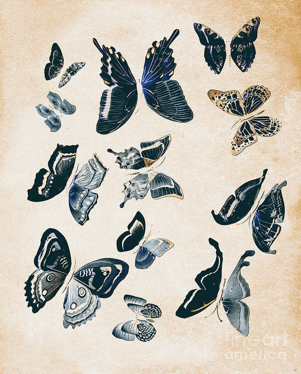 Antique Art Print featuring the photograph Scrapbook Butterflies by Jorgo Photography - Wall Art Gallery