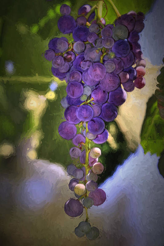 Grape Print featuring the photograph Fruit Of The Vine by Donna Kennedy