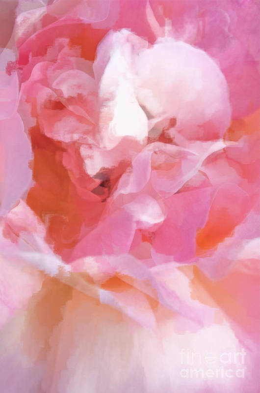 Rose Art Print featuring the photograph Garden Ballet by Gwyn Newcombe