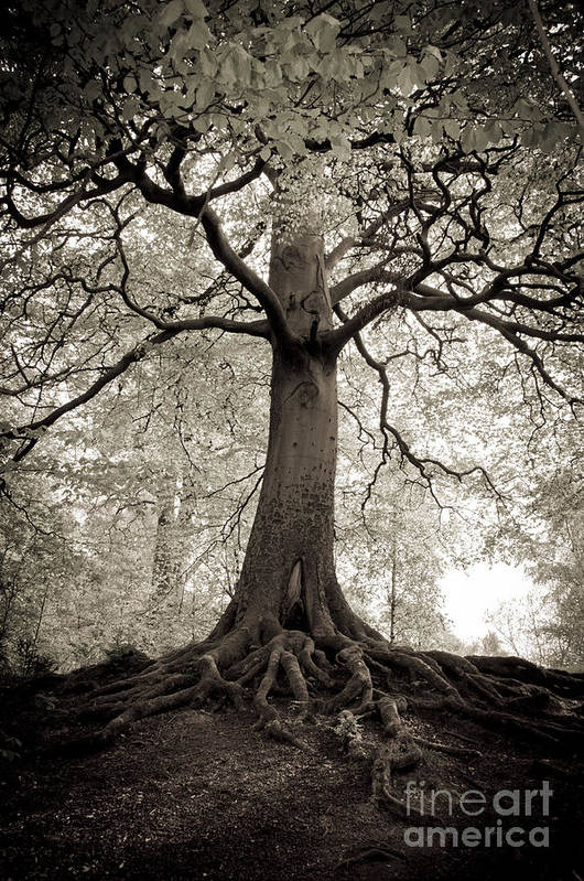 Tree Art Print featuring the photograph Tree Of Life by Dominique De Leeuw