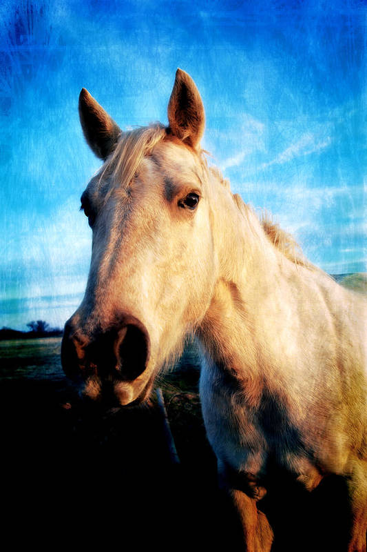 Horse Photographs Art Print featuring the photograph Curious Horse by Toni Hopper