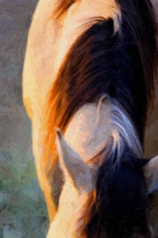 Equine Art Print featuring the photograph Equine Glow by Nick Sokoloff