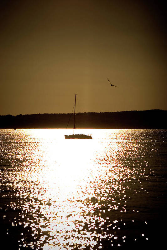 Herring Gull Art Print featuring the photograph Harbor Silhouette by Jack Foley