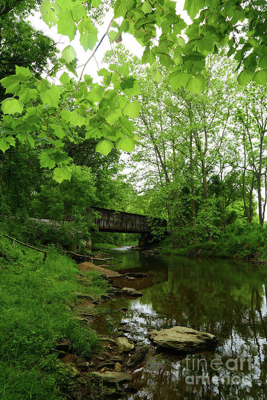Patapsco River Art Print featuring the photograph Summer Woodland And The Patapsco River Maryland by James Brunker
