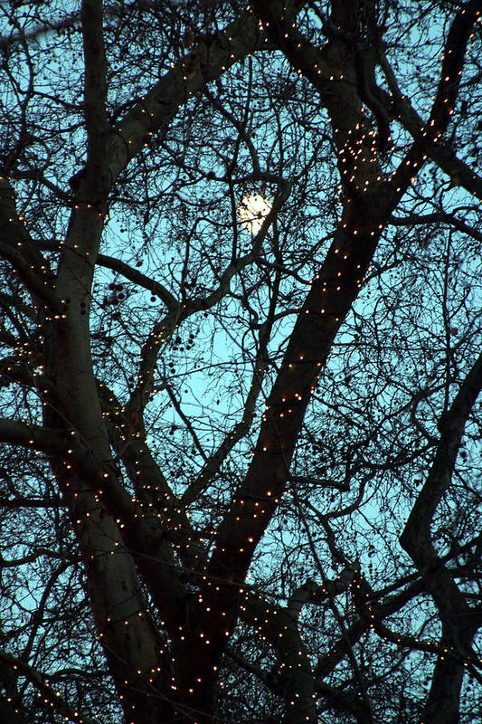 Jez C Self Art Print featuring the photograph Tree Light by Jez C Self