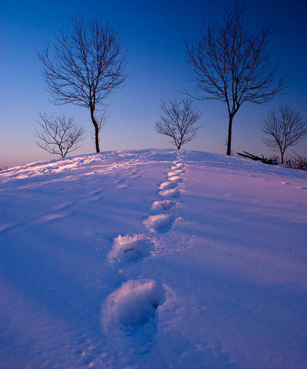 Snow Art Print featuring the photograph Footsteps by Cale Best