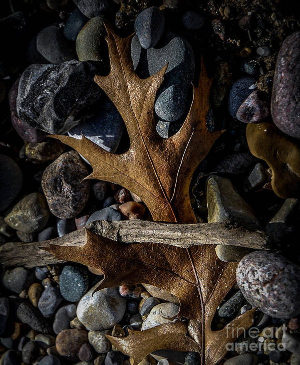 Leaf Art Print featuring the photograph Leaf And Stones by Ronald Grogan