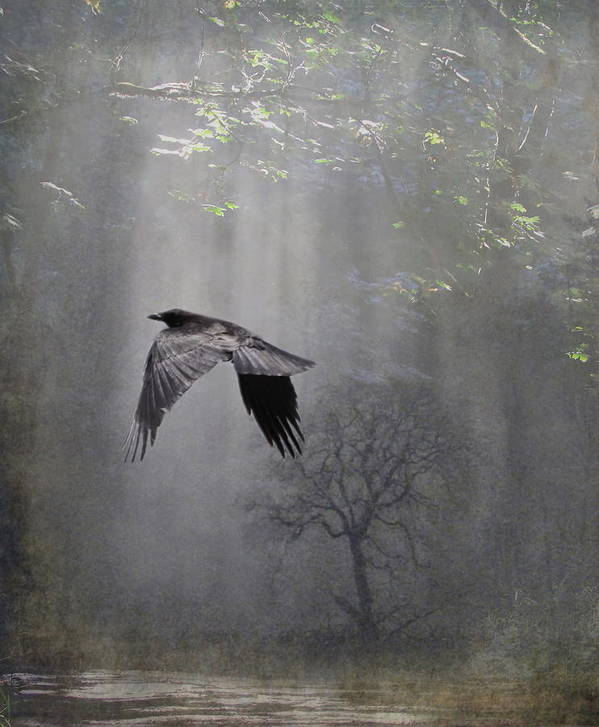 Mystery Art Print featuring the photograph Mysterious by Angie Vogel