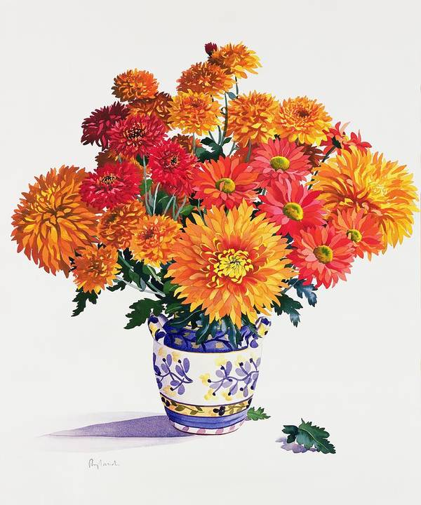 Chrysanthemum Print featuring the painting October Chrysanthemums by Christopher Ryland
