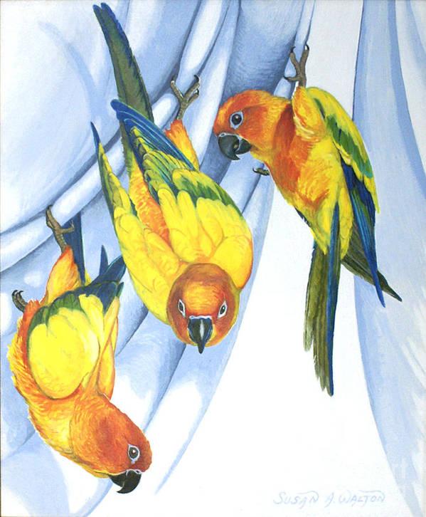 Sun Conure Art Print featuring the painting Trouble - Sun Conure Trio by Susan A Walton