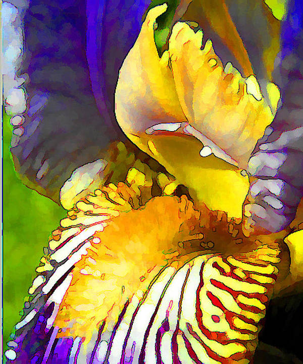 Yellow And Purple Iris Art Print featuring the digital art Yellow And Purple Iris by Peggy Gabrielson