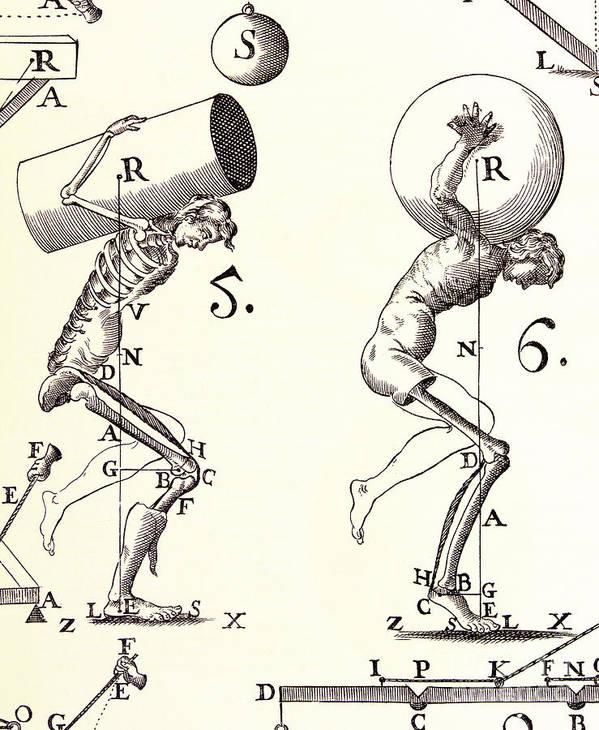 Anatomy Art Print featuring the photograph Biomechanics by Science Source