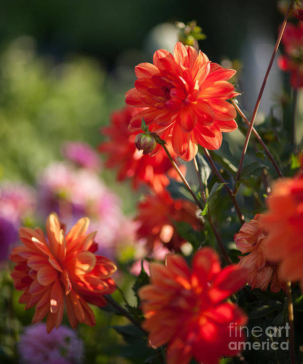 Flower Art Print featuring the photograph Beautiful Day by Mike Reid