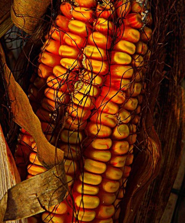 Nature Art Print featuring the photograph Corn by Chris Berry