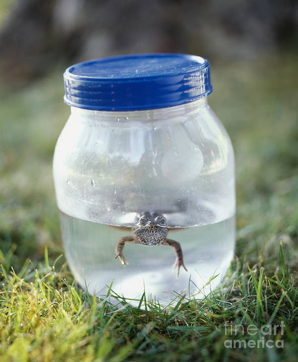 1 Art Print featuring the photograph Frog In A Jar by Adam Crowley