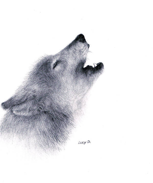 Wolf Art Print featuring the drawing Howl by Lucy D