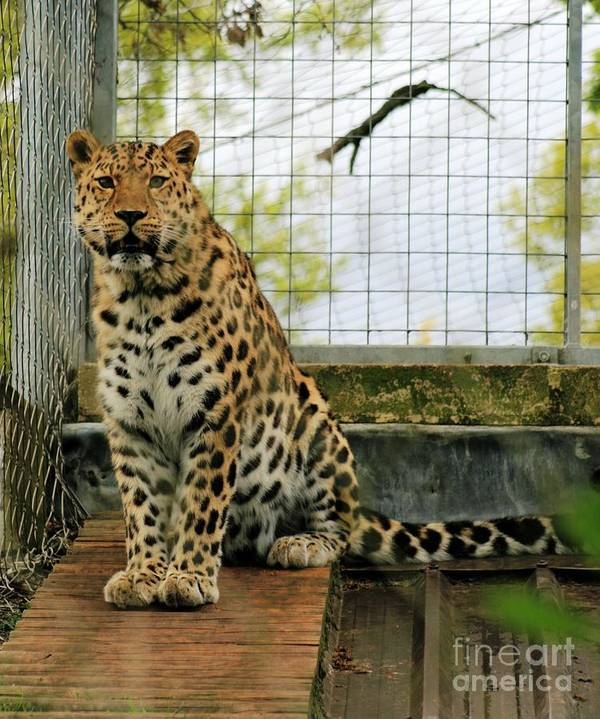 Leopard Art Print featuring the photograph Leopard 4 by Ruth Hallam