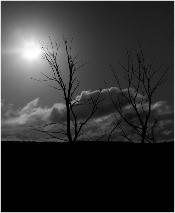 Tree Art Print featuring the photograph Reach For The Sun by Nigel Jones