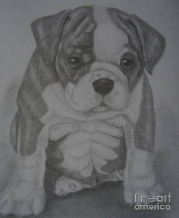 Dog Art Print featuring the drawing Boxer Puppy by Ian Lennox