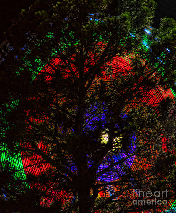 Art Print featuring the photograph Colorful Tree by James BO Insogna